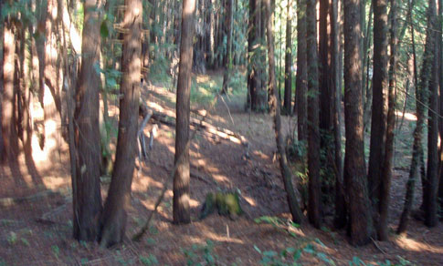 Santa Cruz Mountains Trail Race