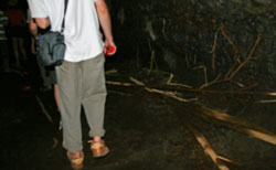 Picture: Roots cover the lava tube cave floor