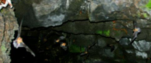Picture: Bats
