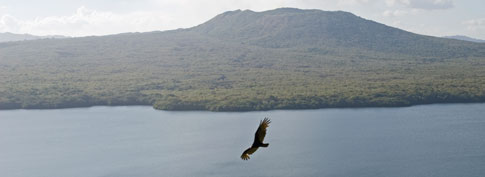 Picture: Bird flys over Lake Masaya, infront of the Masaya Volcano