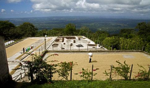 Coffee Plantation on Mombacho Volcano