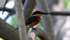 Juan Venado Nature Reserve