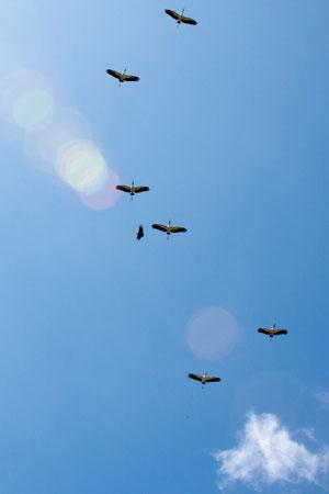 Juan Venado Nature Reserve, white & black birds