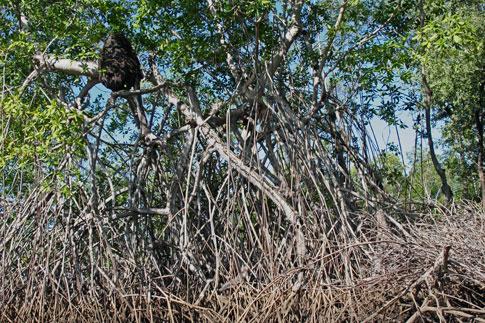 Juan Venado Nature Reserve, Termite nest with bird