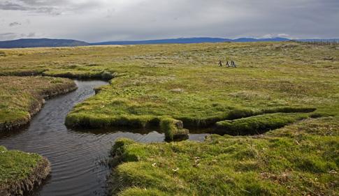 Seno Otway Penguin Colony