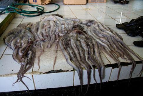 Squid, Fish Market, Puerto Montt, Chile