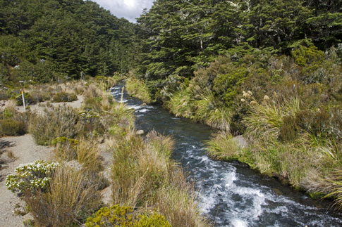 Rainforest, Tongariro National Park, New Zealand